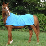 cooling products for horses