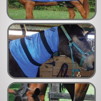 Products Archive Equi Cool Down